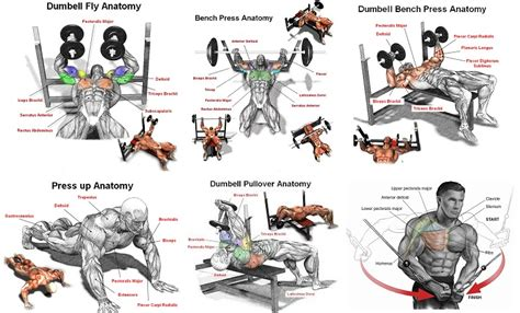 7 exercises for effective pectoral workouts all