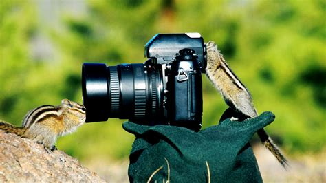 wallpaper cameraman chipmunks funny hd wallpapers hd wallpapers backgrounds