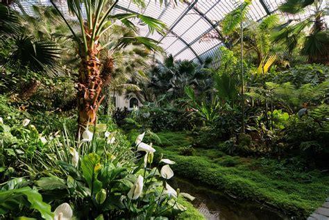 Palmen Garten by