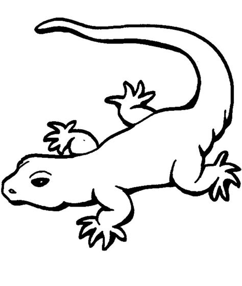 cute gecko coloring pages gecko drawing clipart best