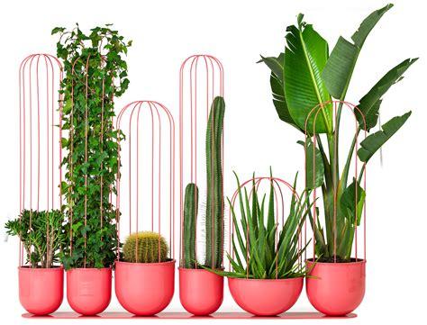 vasi per cactus cacti planters i vasi per cactus ispirati a frida kahlo