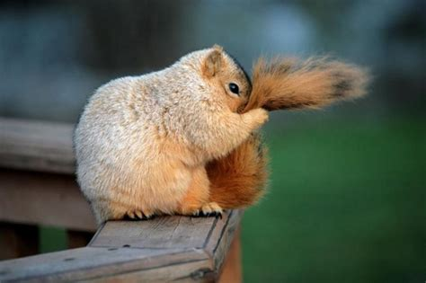 Is Really Bashful by A Timid Squirrel Pixdaus