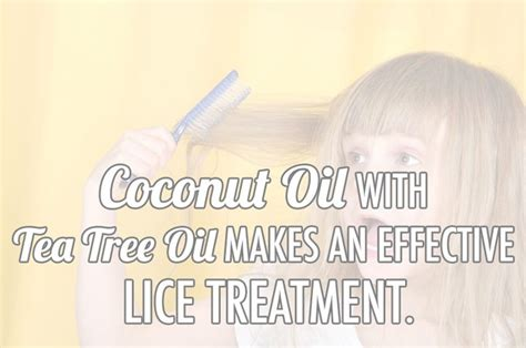 coconut lice treatment home remedy coconut