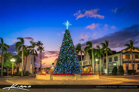 flordia xmas trees royal stock photo royalty free images for designers and commercial businesses