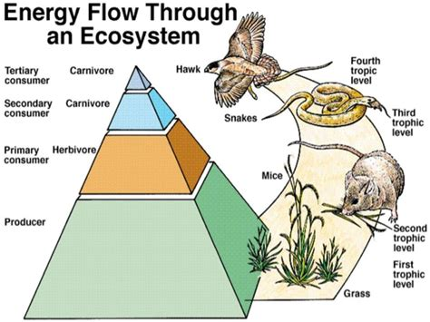 pattern of energy and matter flow ecology