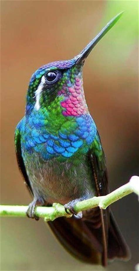 blue green pink hummingbird animals pinterest