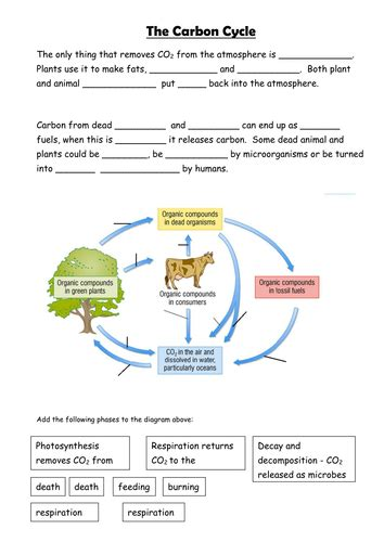 carbon cycle diagram worksheet carbon cycle ecology cycling