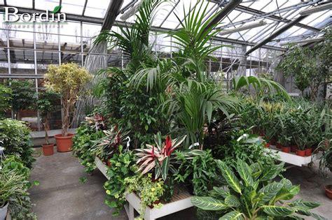 piante di interno piante da interno bordin garden vivai