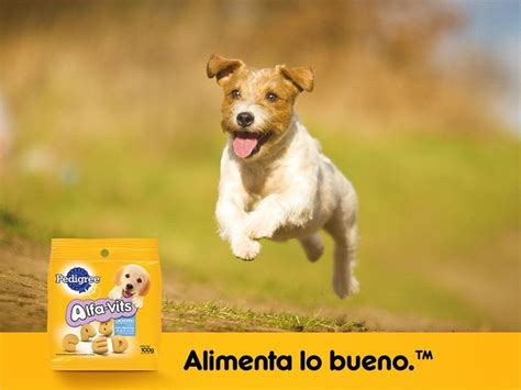 Pedigree Can Chiken 400 Gr 368 best images about mars 174 petcare on for