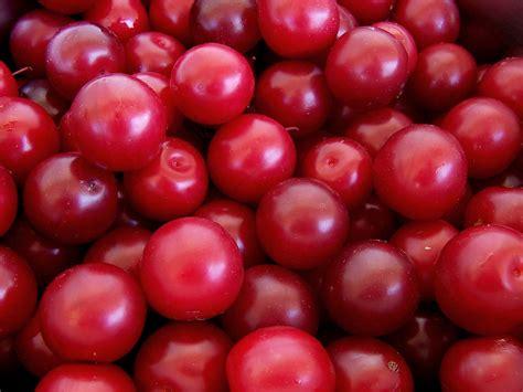 imagenes ciruelas rojas calorias de una unidad de ciruela cuantas calorias