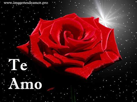 imagenes de rosas q digan te amo 14 imagenes de hermosas rosas con frase te amo