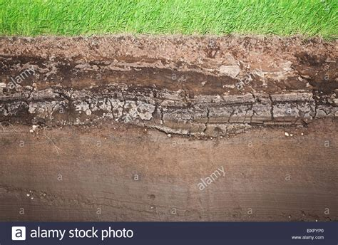 Soil Cross Section by Cross Section Of Green Grass And Underground Soil Layers Beneath Stock Photo Royalty Free Image