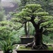 accessori giardino zen giardini zen accessori da esterno giardini zen
