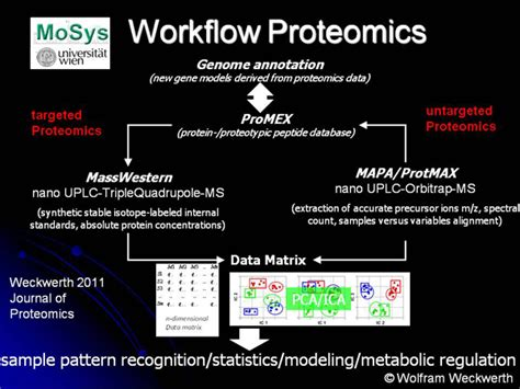 proteomics workflow molecular systems biology research