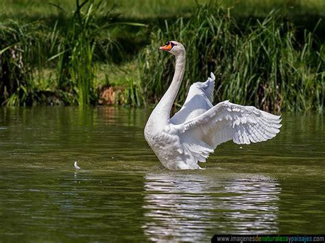 imagenes de santuarios naturales imagenes de hermosos paisajes naturales con animales