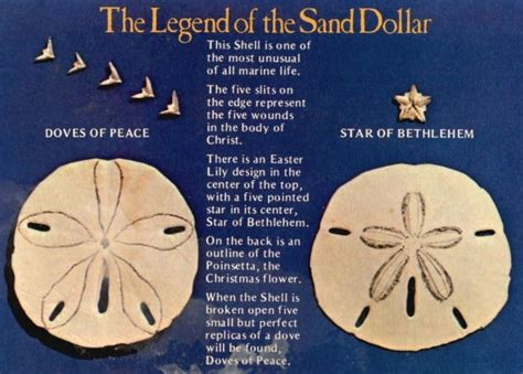 the with the sand dollar books just the wheels go sand dollar dreaming
