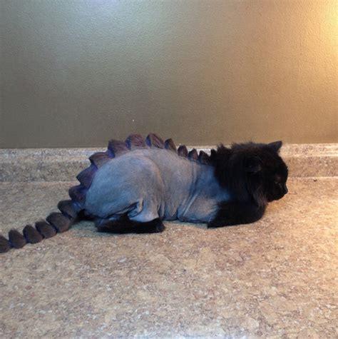 a grooming salon is offering a dragon cut for cats