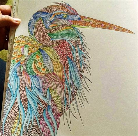 colouring books for adults animal kingdom with milliemarotta illustrator of