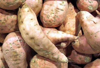 grow sweet potatoes planet natural