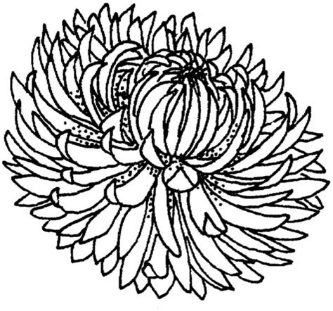 chrysanthemum mouse coloring page chrysanthemum pages coloring pages