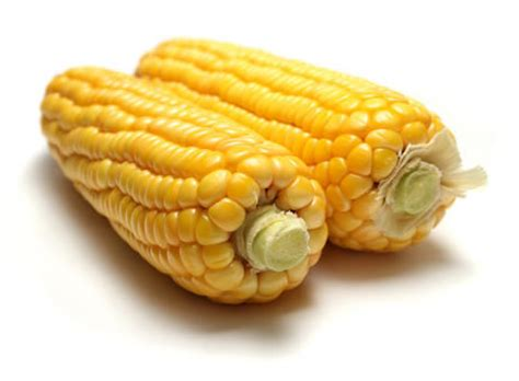 is corn bad for dogs why is corn so bad as an ingredient in pet food web dvm