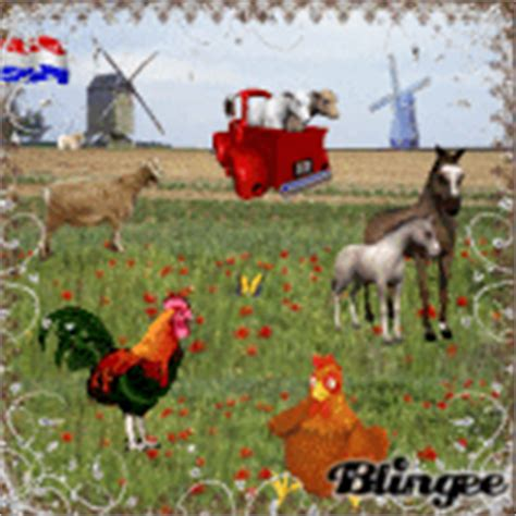 gif wallpaper birds animated chicken graphic 1537637 blingee com