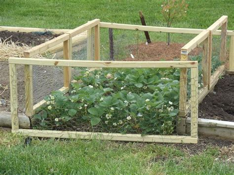 strawberry beds strawberry bed gardening pinterest