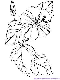 gambar mewarnai bunga sepatu gambar mewarnai bunga