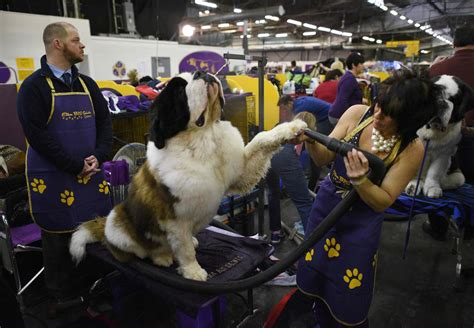 westminster kennel club show westminster kennel club show lokalokam westminster kennel club breeds