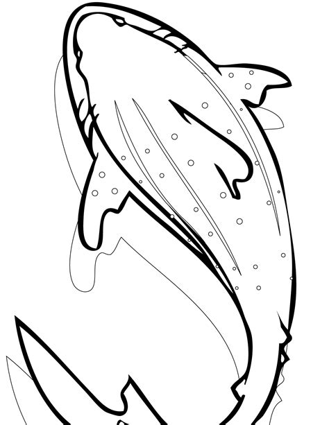 Free Printable Shark Coloring Pages For Kids Whale Shark Coloring Pages