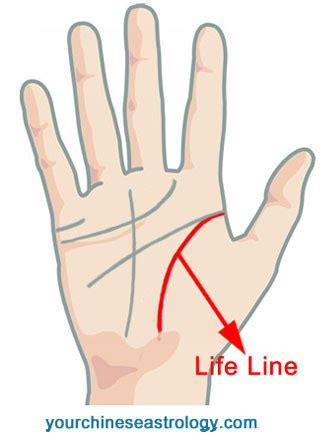 lines in palmistry reading major palm reading palmistry guide basics of