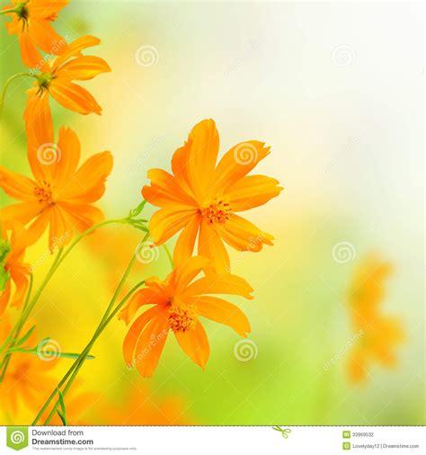 border design flower yellow beautiful flowers yellow border floral design stock
