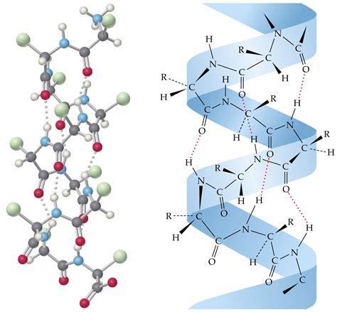 protein keratin chemistry of cosmetics part ii scientific scribbles