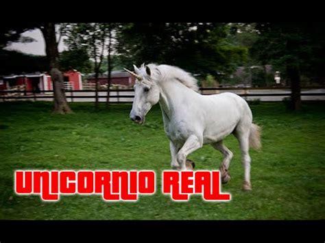 imágenes de unicornios verdaderos increible unicornio es grabado por video camara 100 real