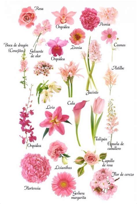 imagenes de flores naturales con sus nombres tipos de flores rosa para tu boquet