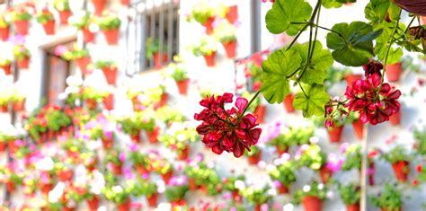 reserva patios de cordoba visita guiada patios de c 243 rdoba nattivus