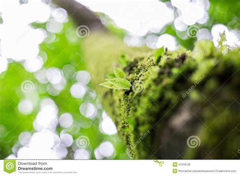 Fresh Green Light by Fresh Green Leaves Stock Photo Image 41018129