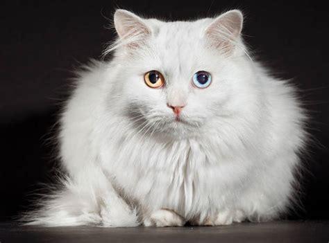 Weird Cats You Secretly Want