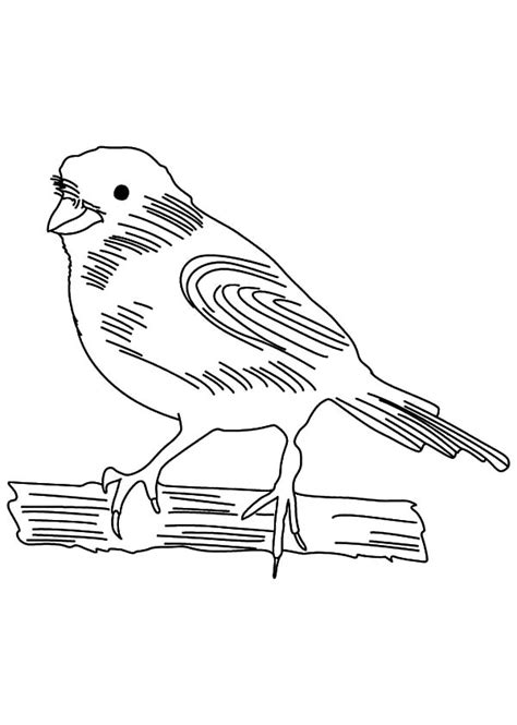 bird singing coloring page canary bird singing coloring pages best place to color