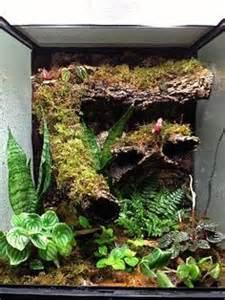 Vivariums/terrarium/palidarium/aquascape on Pinterest   Vivarium