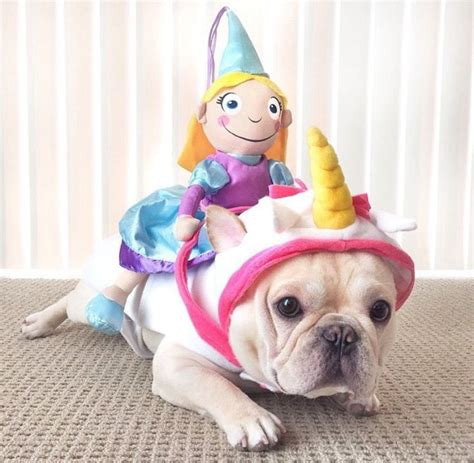 pug in unicorn costume 191 best images about frenchie costumes on puppys costumes and