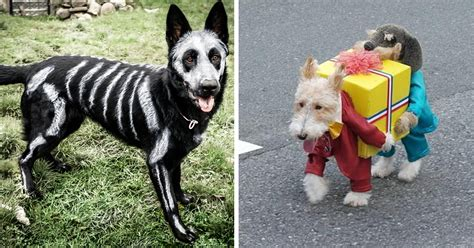 costumes for puppies 20 terrifyingly pawsome costumes for dogs bored panda