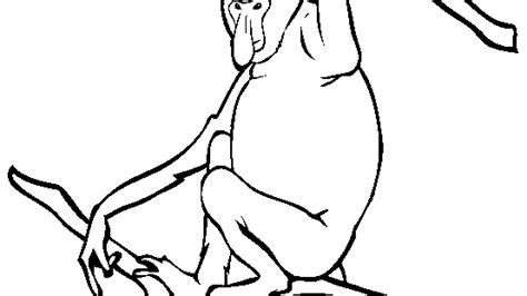 proboscis monkey coloring page plate of cookies drawing clipart panda free clipart images