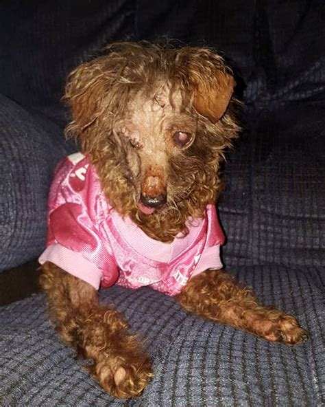 special needs dogs finding fate and the rescue of aging special needs dogs tbo