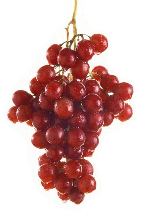 imagenes de uvas tintas uva sin pepitas flame seedless caracter 237 sticas y