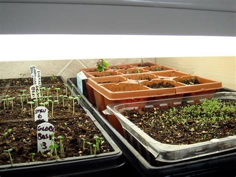 shop lights for seed starting seed starting 187 the door garden