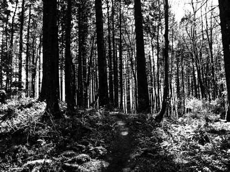 white black forest or richard pelletier s photography journal