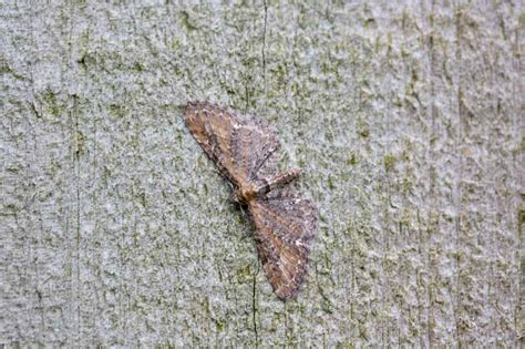 common pug names ceredigion moths a busy a simple of luxury