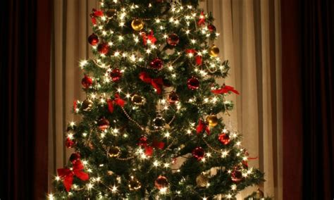 advice on keeping your christmas tree fresh smart tips