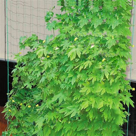climbing plant mesh climbing plant supporting netting garden vegetable